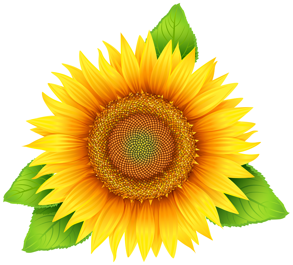 Sunflower PNG Clipart Image